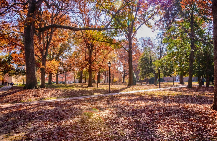 """A Beautiful Autumn Day on Campus"" University of North Carolina Chapel Hill, NC"