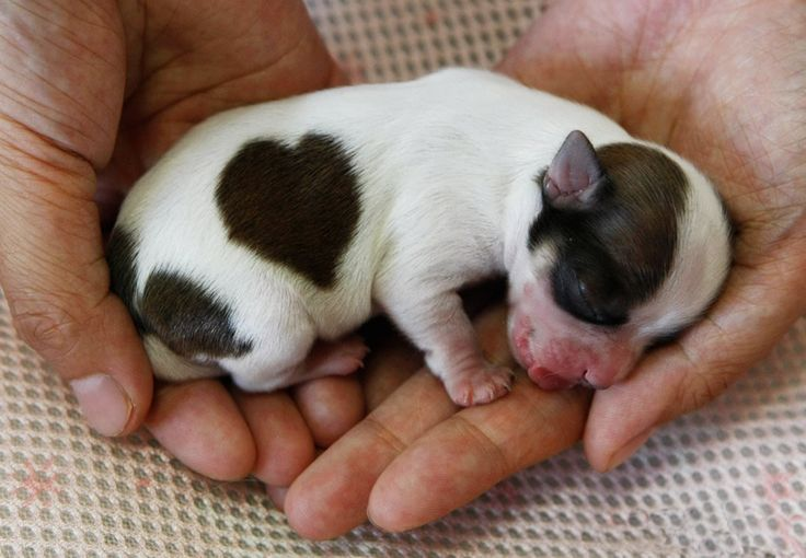 New Puppy Born with a Loving Heart