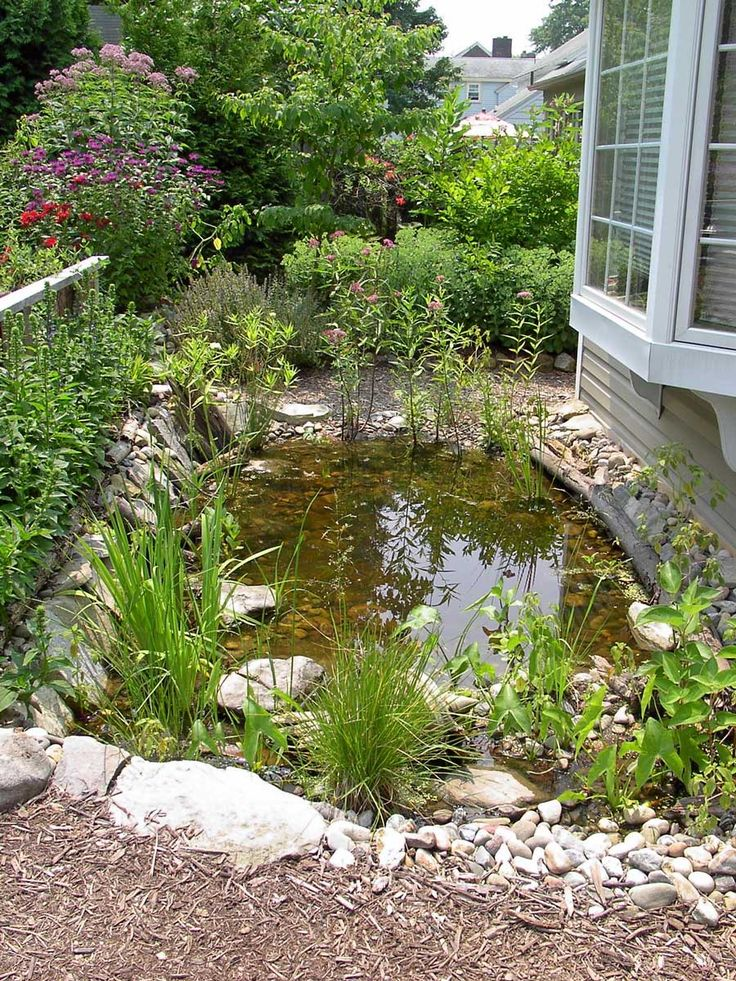1000 images about wildlife ponds on pinterest gardens for Natural garden pond
