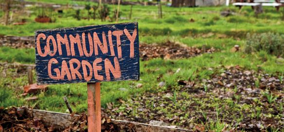 10 images about Community Gardens on Pinterest Gardens