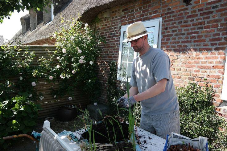 HAVEHJERNEN: juli 2013 In the garden