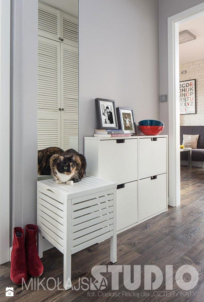 Wnętrze z kotem - zdjęcie od MIKOŁAJSKAstudio - Hol / Przedpokój - Styl Nowoczesny - MIKOŁAJSKAstudio