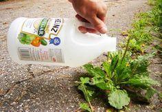 Al usar vinagre para el jardín, estás utilizando uno de las mejores maneras de mantener tu jardín en buenas condiciones, si le das el uso adecuado.