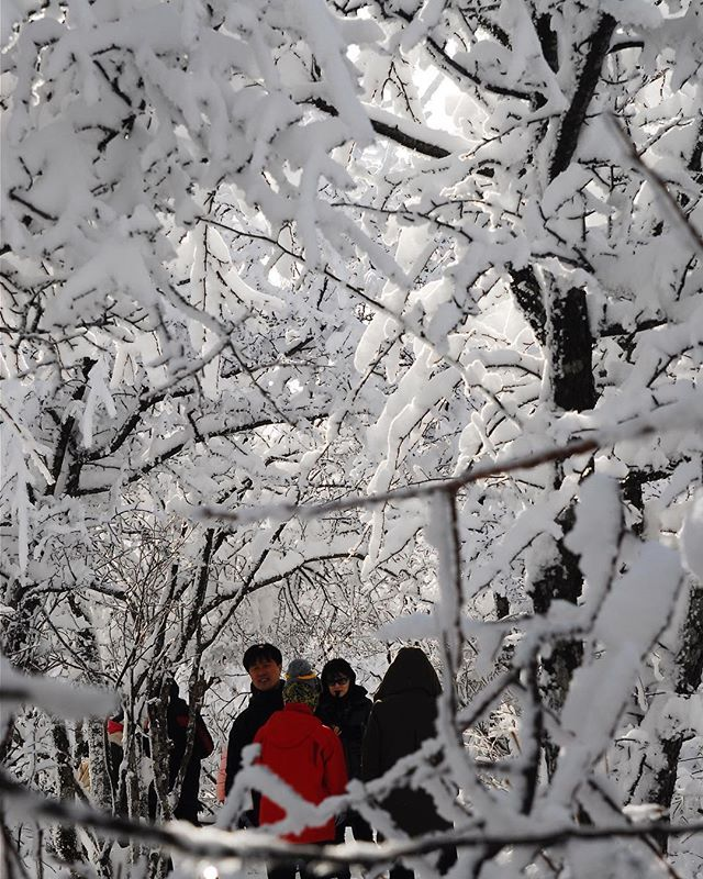 Walking through a winter wonderland. When its not a 2018 Winter Olympic venue its a tourist area where a popular Korean drama was filmed.  At the top of one of the mountains at Yongpyeong Resort the venue for the Alpine Skiing event at this years Winter Olympics in Pyeongchang Gangwon Province South Korea. . . . #winter #winterolympics #pyeongchang2018 #snow #alpineskiing #gangwondo #olympics #평창 #용평리조트 #강원도 #겨울 #눈 #natgeotravel #BBCTravel #tlpicks #lonelyplanet #Canadiantraveller…