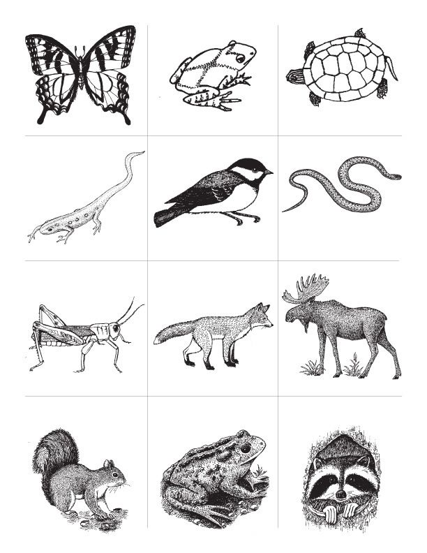 coloring pages animal classification activities - photo#12