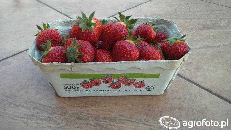 #truskawki #owoce #wakacje #smaczne #zdrowo