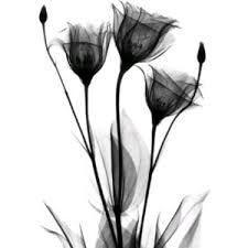 madressilva flor tattoo - Pesquisa Google