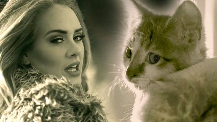 "This ""Adele"" video--featuring KITTENS!"