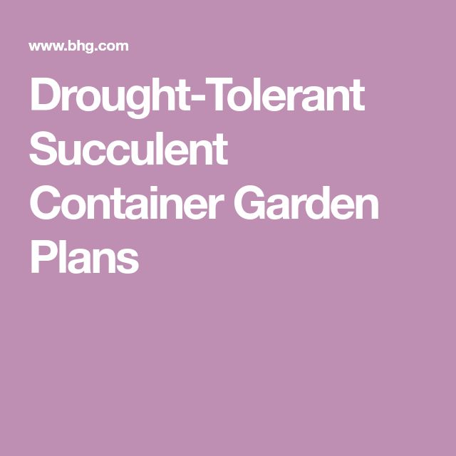 Drought-Tolerant Succulent Container Garden Plans – Succulents