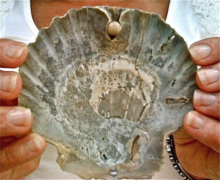 Fossil scallop shell with pearl imbedded in it.  Florida
