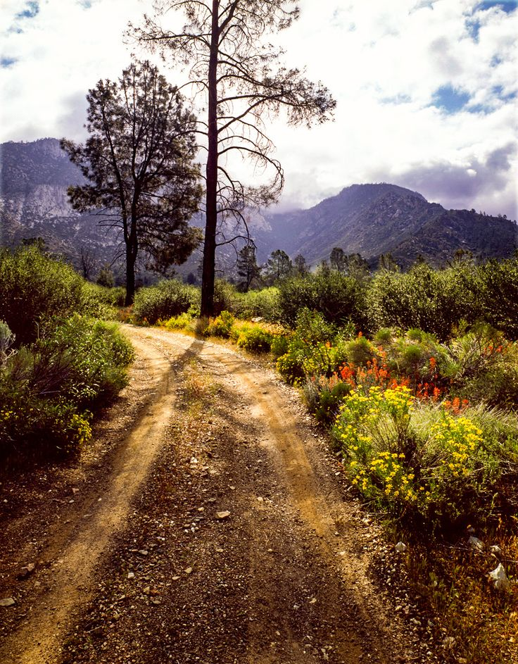 Spring in the Sierra foothills (California) by John Wolf