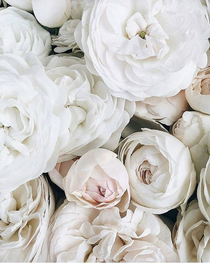 Blogger Mode, Reisen & andere schöne Dinge ✨ Kooperationsanfragen: con …  -… – Blumen