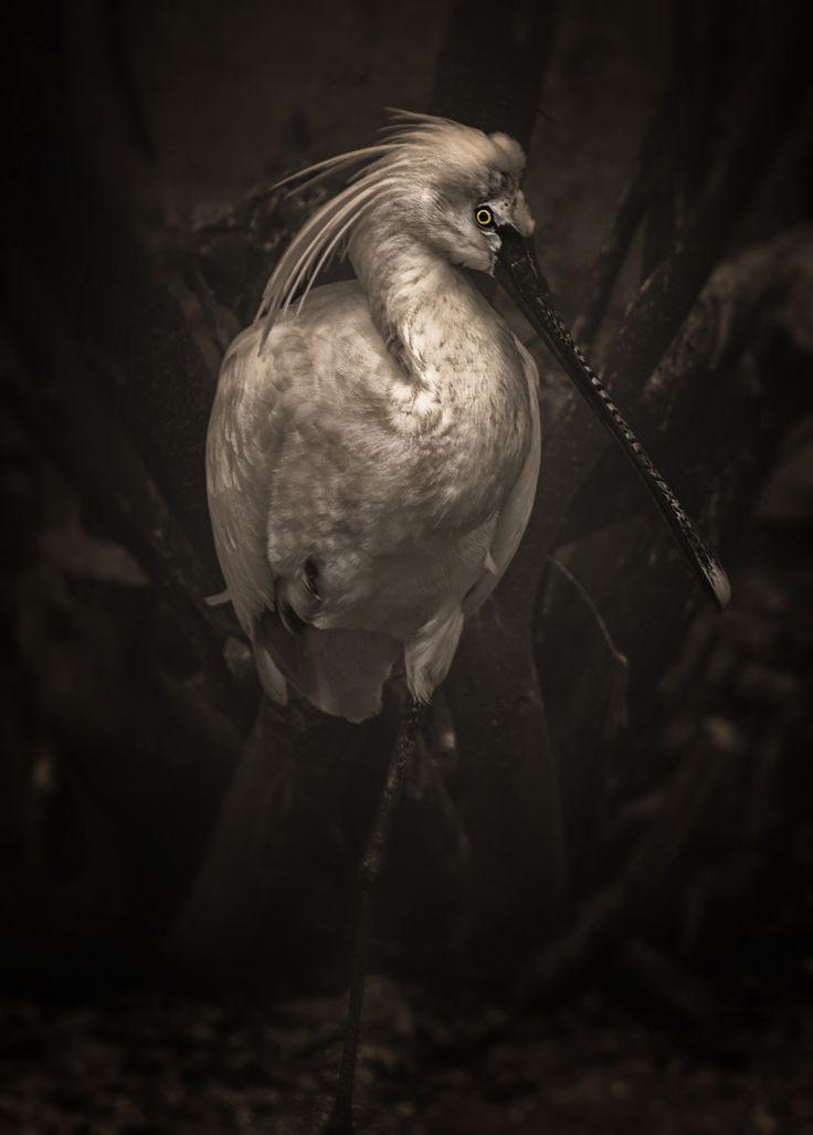 Bird Portrait by TasosKDs on 500px