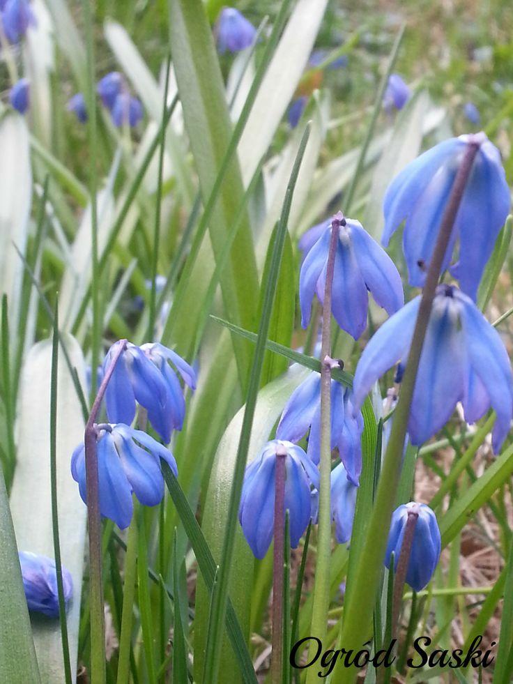 #Wiosna / #Spring / #Printemps