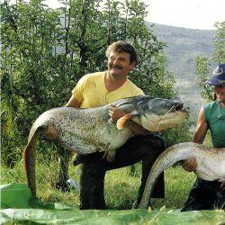 Wels Angeln im spanischen Katalonien, am Fluss Ebro.  Riesige Welse gibt es seit Jahren am Grund des Flusses Ebro zu fangen, Kevin Maddocks erfüllte sich einen Wunsch, Wels Angeln und fuhr auf Großfisch-Jagd.  Das muss man sich vorstellen: In pechschwarzer Nacht in einem Boot, mit einem Fisch an der Angel, der größer ist als man selbst!  http://www.angelstunde.de/wels-angeln/