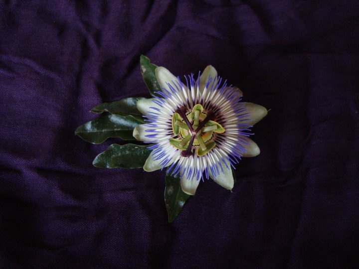 clock flower :)