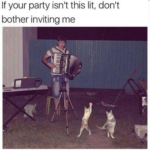"""If your party isn't this lit, don't bother inviting me."" Cats dancing to accordion music. Heck YEAH!!!"