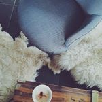 """DAVID & GRACE Lifestyle on Instagram: """"Daily Mornings~"""""""