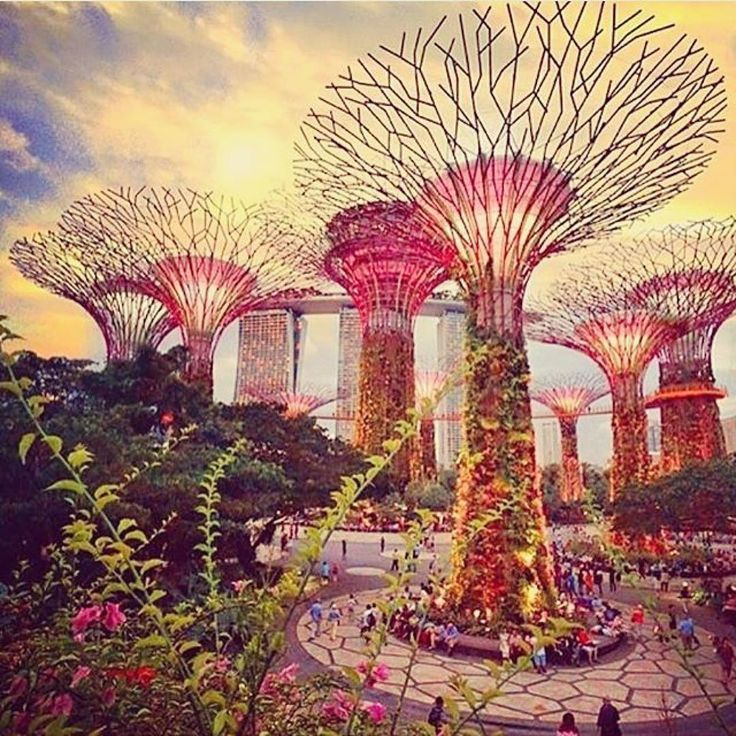 These! Gorgeous solar trees in Singapore. How do we get these in Seddon? @health_kulture #barre #pilates #barre #meditation #seddon #healthyliving #solartrees #cleanenergy #sopretty