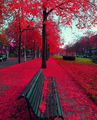 Red Fall : pics