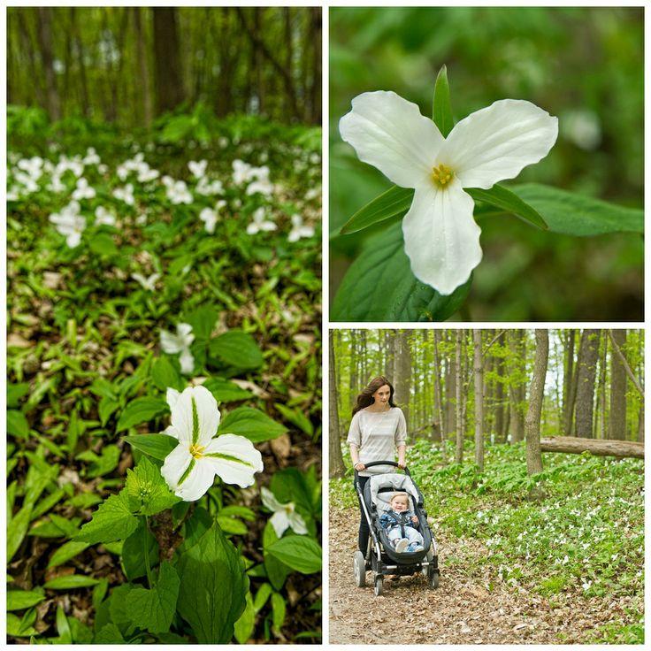 Discover the Trillium Trail at Bronte Creek Provincial Park http://www.ontarioparks.com/park/brontecreek