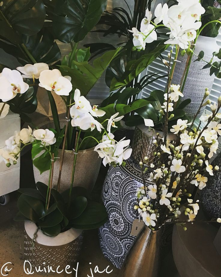 #plants #flowers #green #blossoms #orchids #pots #homedecor #quinceyjac