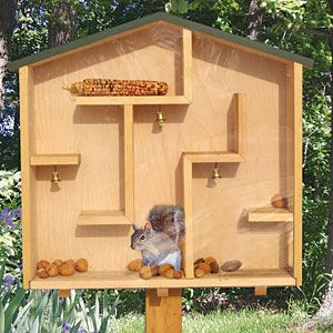 """a """"squirrel feeder"""" that doubles as a maze - the kids would love to watch this!! The grandchildren and I need one of these!"""