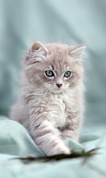 #Assurance #chat pas chère et sans délai de carence à découvrir par ici >>> http://www.mutuelles-pas-cheres.org/comparatif-assurance-chat
