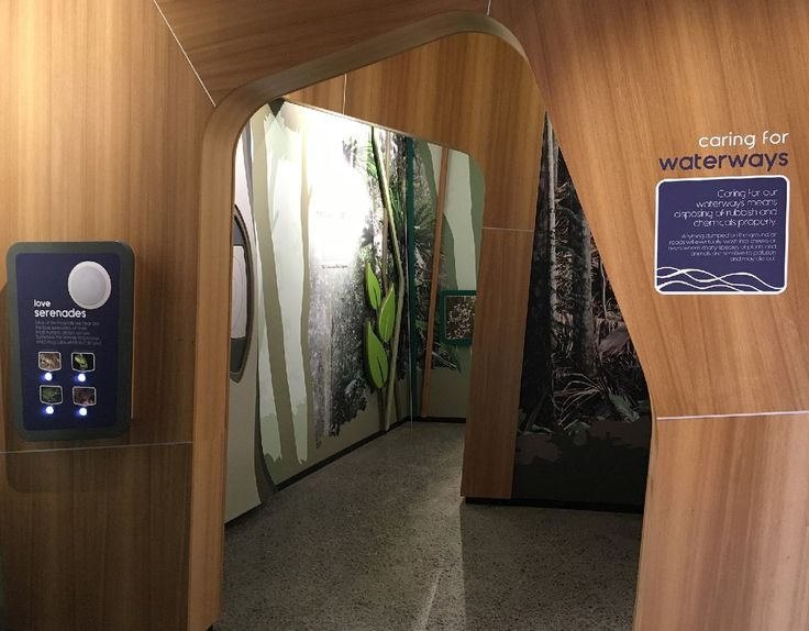 Enter the rainforest and listen to local frog calls on the custom #audiointeractive. #Focusproductions displays at Mary Cairncross Scenic Reserve Rainforest Discovery Centre.