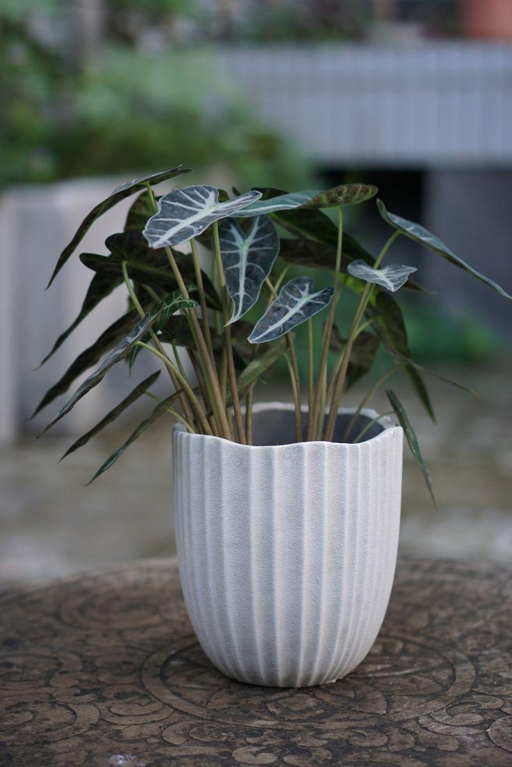 Better homes gardens capalia 6 inch round ceramic