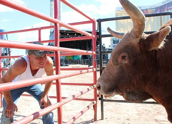 """UFC's Donald """"Cowboy"""" Cerrone weighs in against PBR Bull Percolator"""