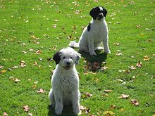 Zeus And Roxanne Dog Breed