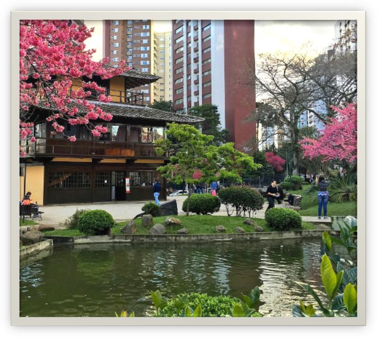 Praça do Japão, cerejeiras floridas no inverno. Curitiba/PR