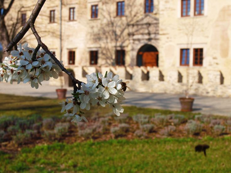 Spring at Uroczysko