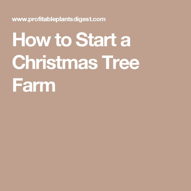 23 best Choose & Cut Your Own Christmas Tree images on Pinterest ...