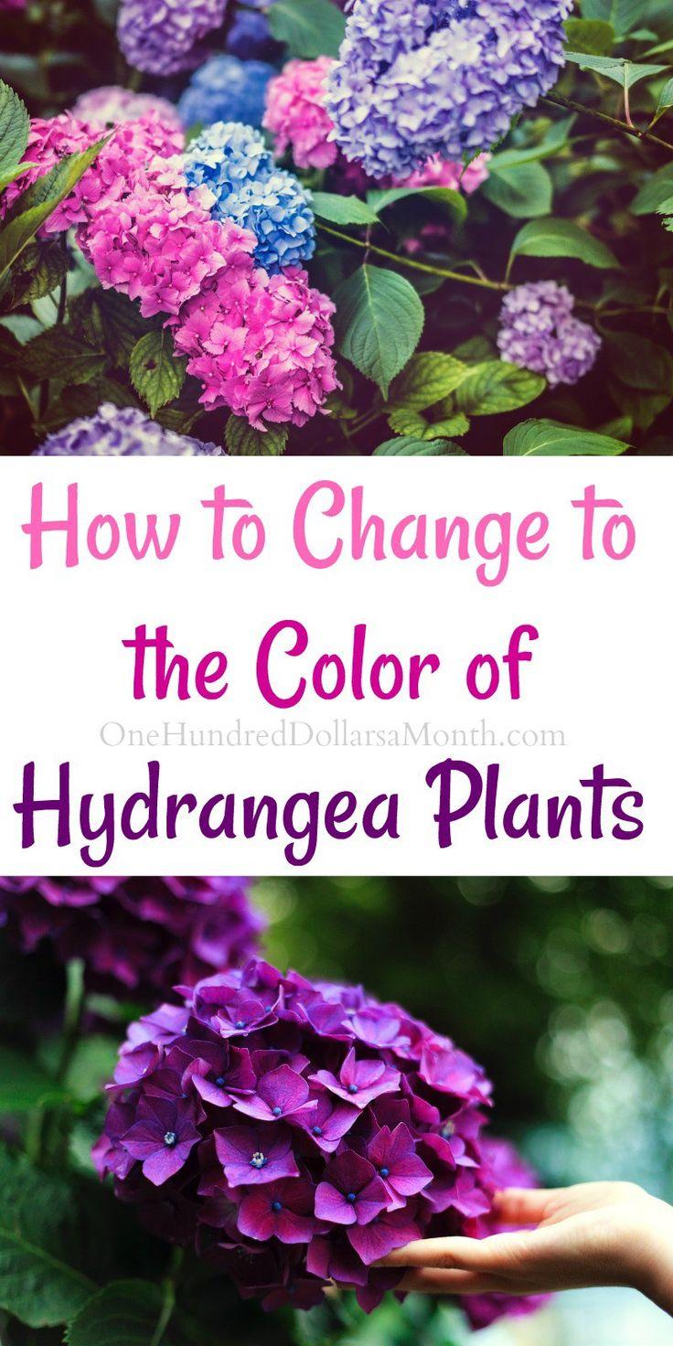 M S De 25 Ideas Incre Bles Sobre Caring For Hydrangeas En