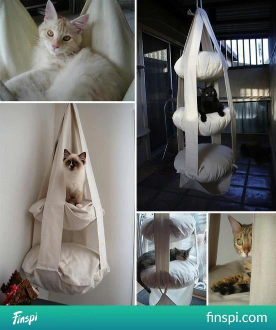 dla kotka #koty