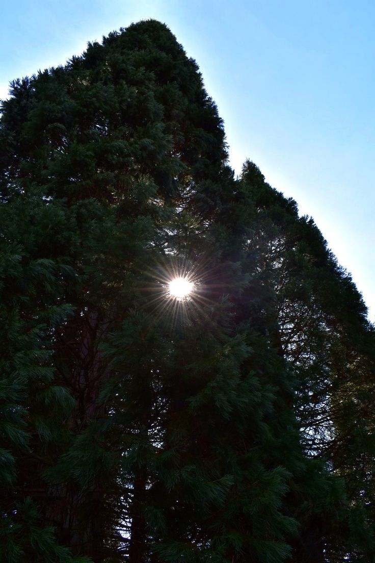 VanDusen Botanical Garden, Vancouver