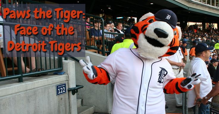Paws the Tiger: Face of the Detroit Tigers - Playful Kitty