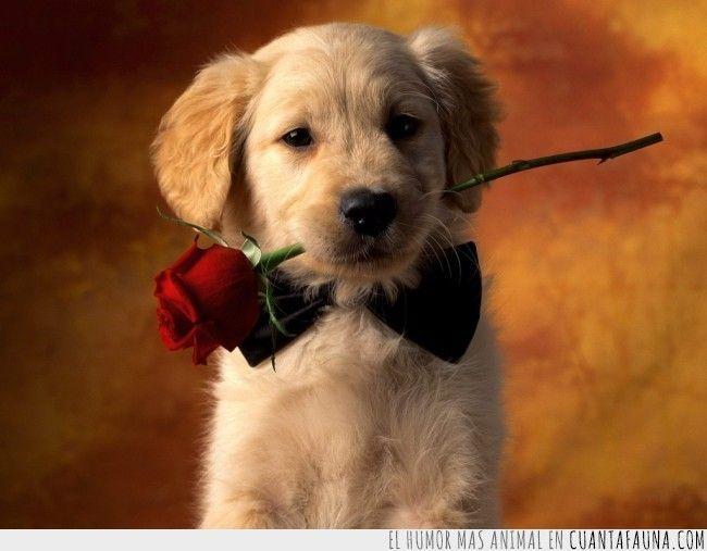 Sabes que estás enamorado cuando…#love #list #humor #dog #cute #animals #amor