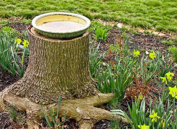 Best 25 homemade bird baths ideas on pinterest walkway for Upcycled tree stumps