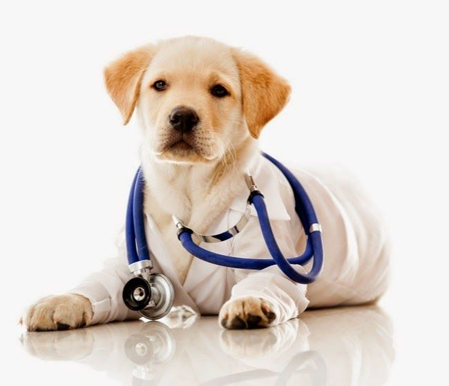 Veterinary Care For Service Dogs