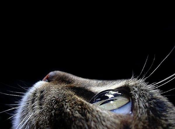 Amazing Photo Moments | Dumage - via http://bit.ly/epinnerPhotos, Macrophotography, Animal Photography, Cat Eyes, Macro Photography, Cateye, Digital Photography, Close Up, Kitty