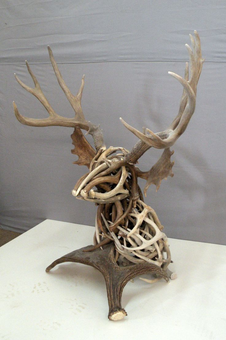 Deer skull mount ideas - Shed Antler Deer