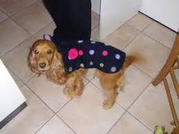 Картинки по запросу tricot pour chien patron