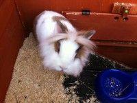 Jerry e Lulù: Coniglietti in adozione
