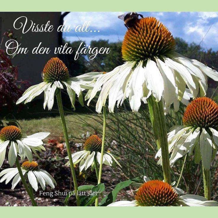 Visste du att vitt egentligen inte är en egen färg utan ljuset som reflekterar alla färger? När vitt blandas med andra färger, får de en mildare energi. På samma sätt lugnar det vita också ner starka färger i trädgårdens mer färgglada rabatter ❤ Maria och Marianne //  Kurs: Feng Shui i Trädgården - del 1