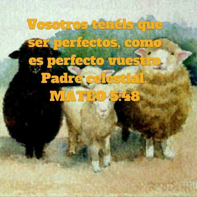 Vosotros tenéis que Ser perfectos, como es perfecto vuestro Padre celestial. Mateo 5:48