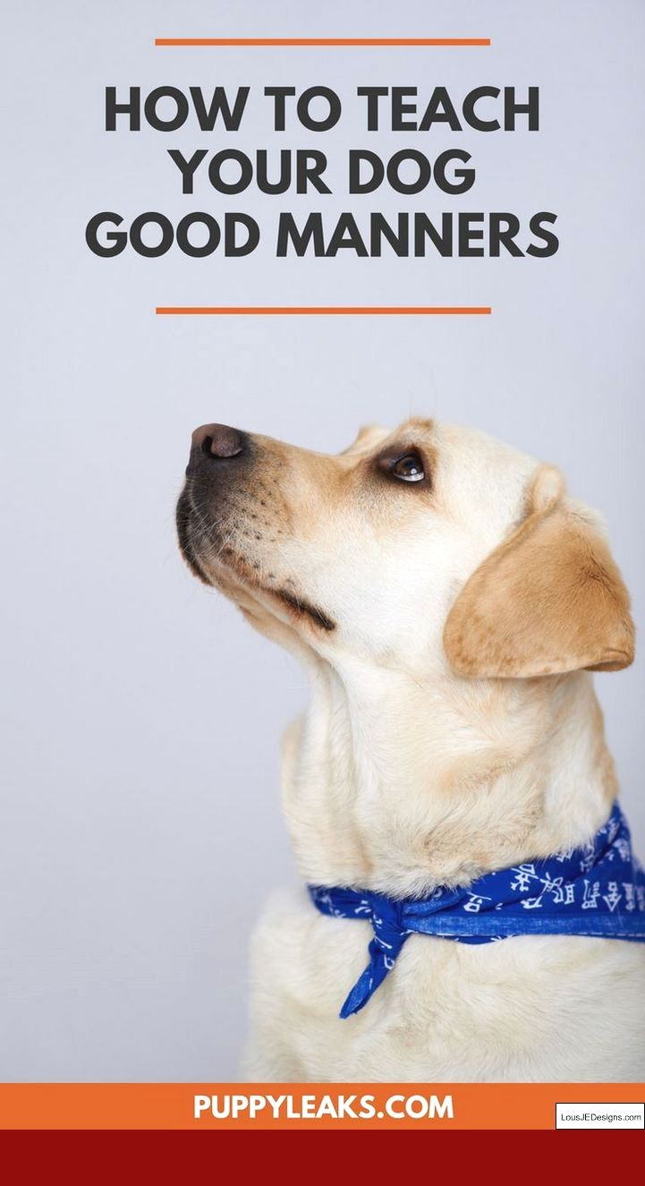 10 Quick Ways To Calm A Hyper Dog Dog Attack Aggressive Dog