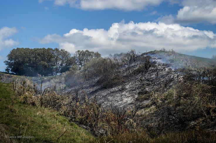 https://flic.kr/p/T5fCBn | Bush Fire Near Raglan